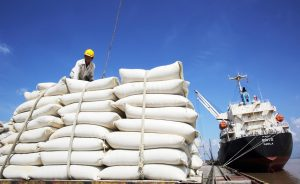Xuất khẩu gạo Việt nam đạt kết quả cao
