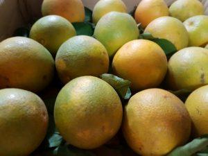 Bệnh loét ở cây ăn quả