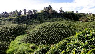 Cà phê Colombia - Thức uống làm say đắm lòng người