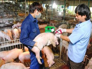 Bệnh dịch ở gia súc