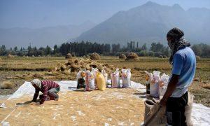 Ấn Độ một nước xuất khẩu gạo lớn trên thế giới
