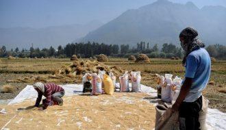 Đầu năm 2021 Việt Nam lần đầu nhập khẩu gạo từ Ấn Độ