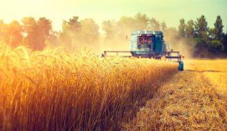Trung Quốc tiến hành nhập khẩu lớn lượng lúa mì của Úc