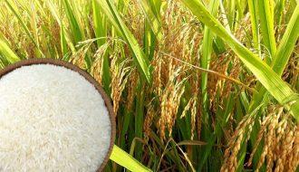 Giá gạo Châu Á tăng mạnh, liên tiếp lập giá kỷ lục trong tuần qua