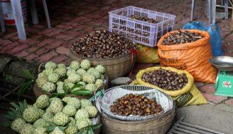 Hạt dẻ Trùng Khánh sản vật nổi tiếng đất rừng Cao Bằng