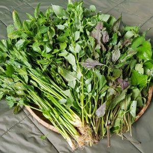 Khám phá ngay cách trồng rau thơm và chăm sóc rau tại nhà