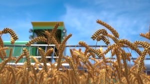 giá lúa mì tăng mạnh