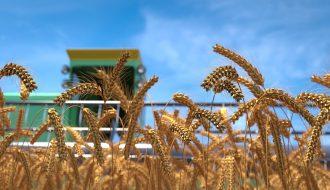 Liệu  2021, nhu cầu lúa mì có làm giá lúa mì tăng mạnh như dự đoán?
