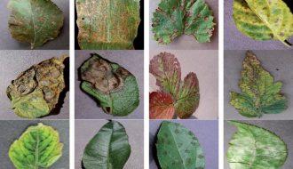Những bệnh hại cây trồng dễ thấy và cách phòng chống bệnh