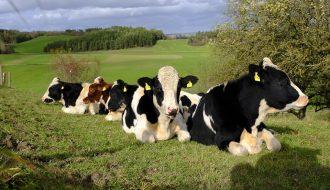 Những biện pháp ghép đôi nhân giống trong chăn nuôi mà bạn không biết