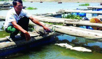 Phương pháp phòng tránh trúng độc, nổi đầu cho cá hiệu quả
