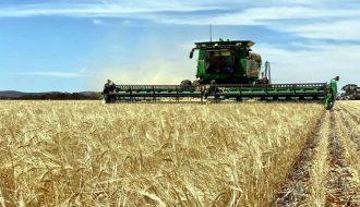 Sự tăng trưởng mạnh của xuất khẩu lúa mì từ Australian sang Trung Quốc