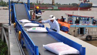 Giá gạo Việt Nam tăng kỷ lục trong nhiều thập kỷ qua