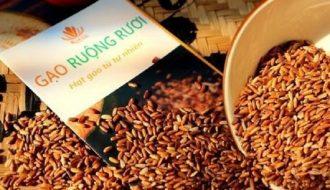 Xây dựng thương hiệu đặc sản gạo ruộng rươi tại Hải Phòng